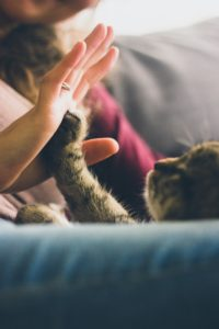 Adopting a pet can help ease the loneliness of chronic illness life