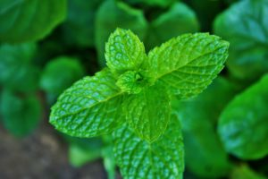 Peppermint can help nausea caused by gastroparesis.